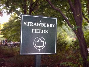 Strawberry Field #1